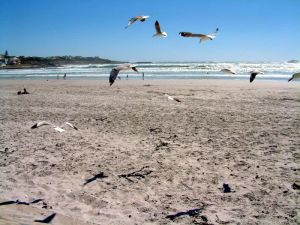 Yzerfontein Main Beach